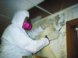 mold blog removal mold in public places